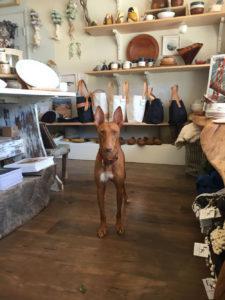 fahey studio dog